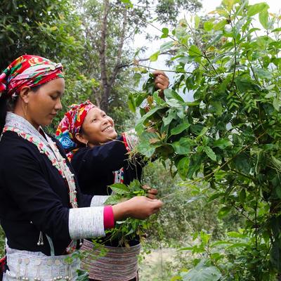Vietnam_Biotrade_Woman | © Helvetas