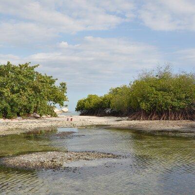 Paysage de mangrove dans le Parc National Naturel Lagon des Huîtres | © Camille Flückiger