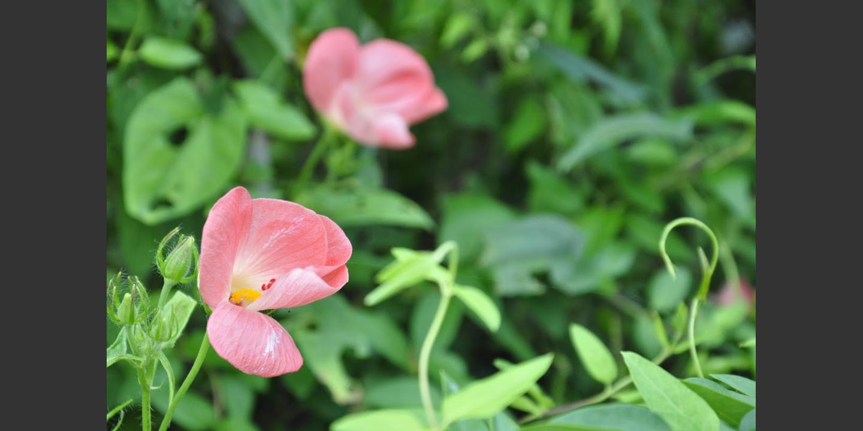 Biotrade_Vietnam_Flower | © Helvetas