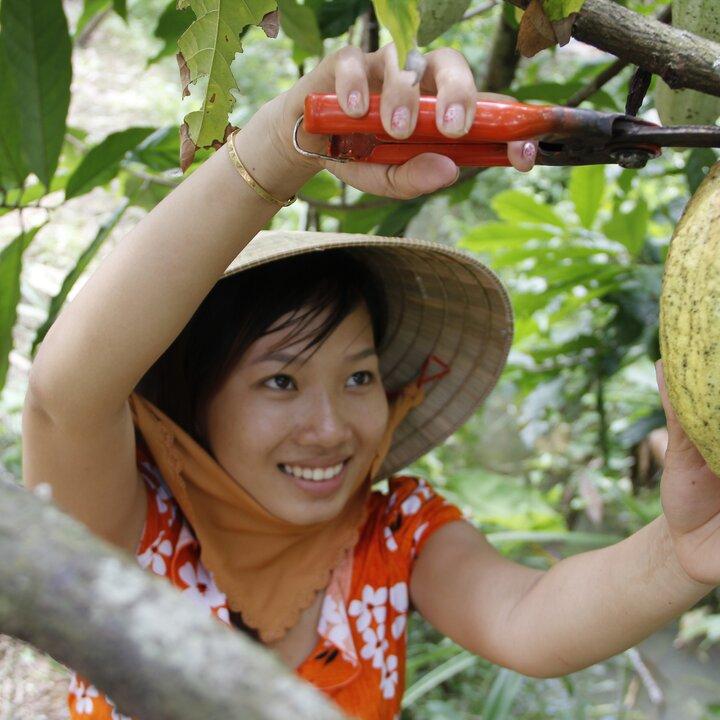 © Cocoa Vietnam. Cacao Vietnam