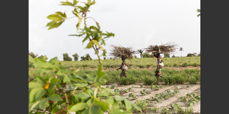 Biolandwirtschaft in Benin (PROFA) | © Flurina Rothenberger