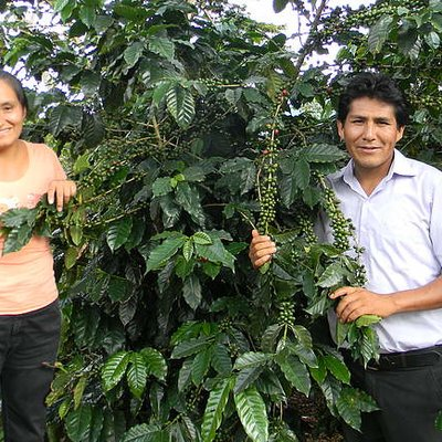 Jóvenes productores de café de la selva central | © Helvetas Perú / Mario Casanova