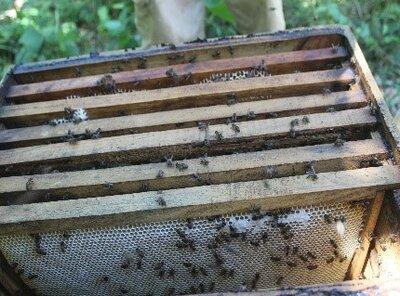 Récolte et extraction miel par KOTTM   © Helvetas