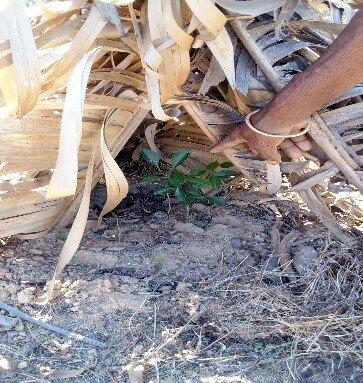 Techniques d'ombrage contre la sécheresse   © Helvetas
